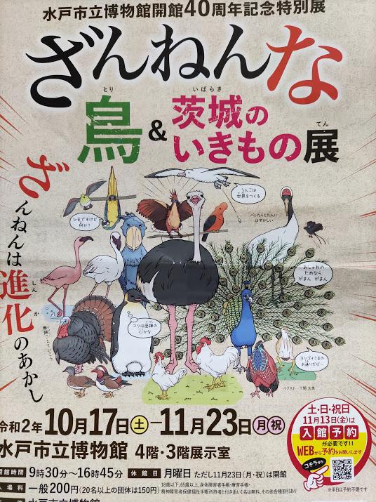 【茨城どうでしょう】水戸市立博物館で特別展「ざんねんな鳥&茨城のいきもの展」はどうでしょう